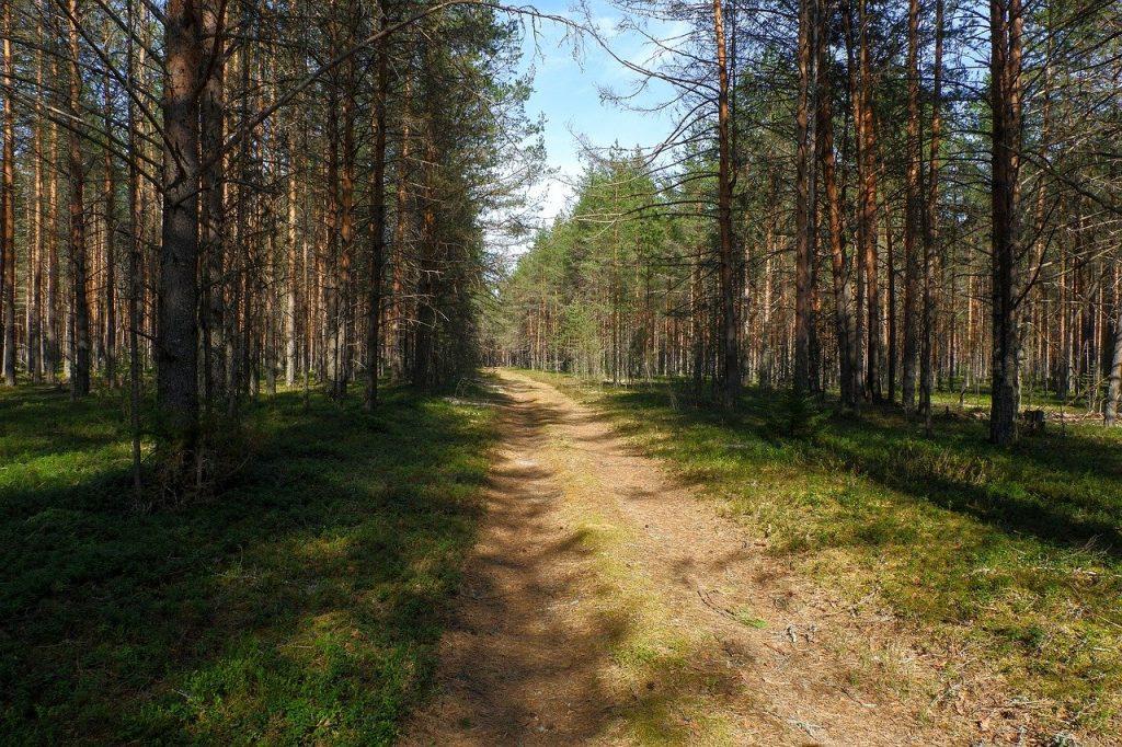 Forest Trees Path Trail Woods  - sergei_spas / Pixabay