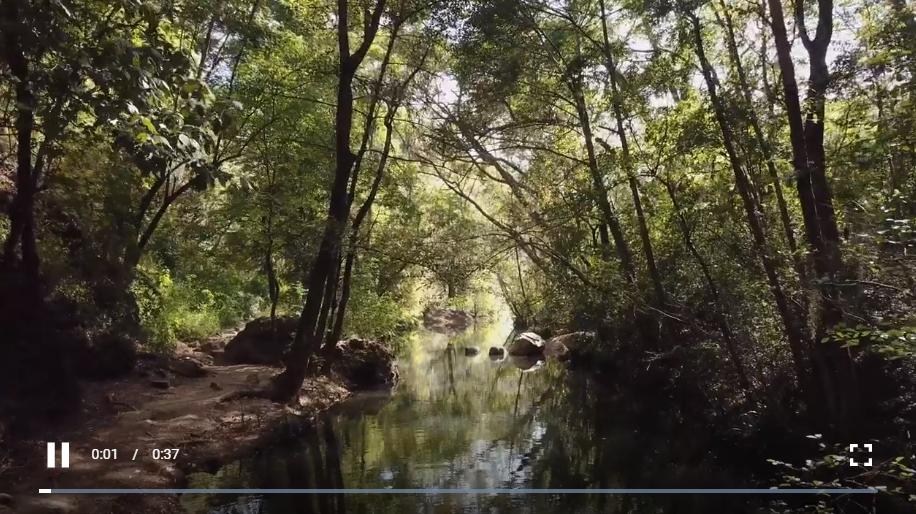 阳光下的森林溪流