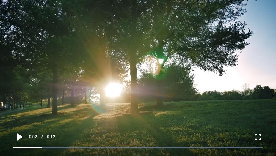 阳光明媚的下午,草地被树木环绕