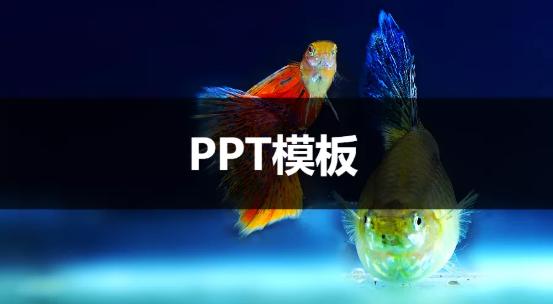 海量分享,6000个PPT模板免费分享中……